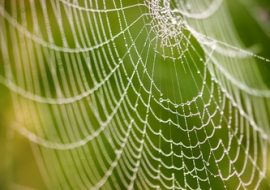 spider phobia hypnosis help